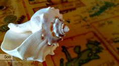 Seashell I took today with my mobile.  My mobile phone gave me more than I expected in terms of detail. :)