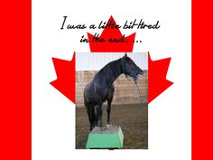 CHARMD show 2017 - with Blain Revelstoke Cesar Canadian Horse, Black Canadians, Horses For Sale, Ranch, Animals, Guest Ranch, Animales, Animaux, Animal