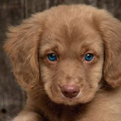 Who can say no to those baby blues? gotta love those eye's!