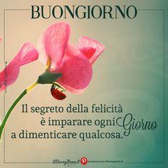 #buongiorno #frasibelle #frasisullafelicità Good Morning, Wish, Improve Yourself, Gandhi, Instagram, Cards, Happy, Frases, Italian Language