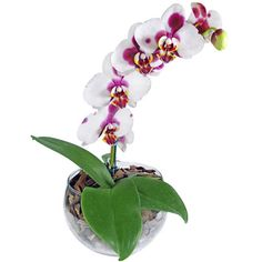 flores de encanto invulgar - Yahoo Image Search Results