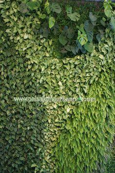 Fachada verde realizada por Paisajismo Urbano en una villa de lujo en Ibiza