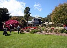 Pukeiti Gardens, New Plymouth