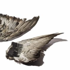 A bird's wing fashioned into a hair comb.