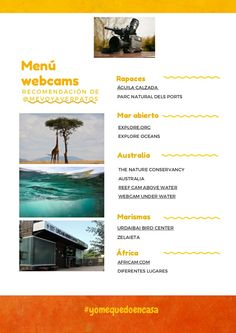 Tough Day, Australia, Natural, Menu, Check, Activities, Menu Board Design, Nature, Menu Cards