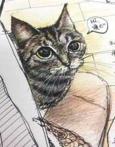 catty Tiaotiao。my workmate's cat