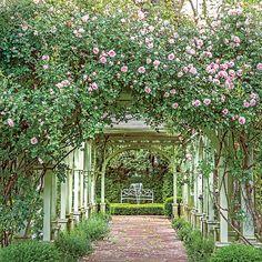 Trim & Tidy Virginia Boxwood Garden - Southern Living