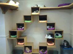 Cat's bedroom