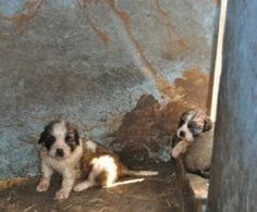 Oh look , Linda Hager is still on the list. http://m.humanesociety.org/news/press_releases/2017/05/horrible-hundred-2017-uncovering-puppy-mills.html#MISSOURI #pets#dogs#cats#birds#rabbits#lovablepets