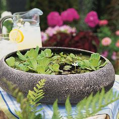 A Simple Water Garden Grab a shallow container, buy a few water garden plants, and turn on the tap. You can have a pretty miniature water garden in just minutes.