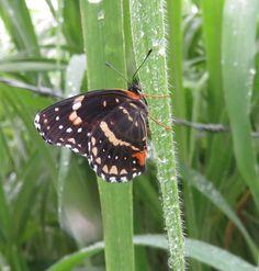 Mariposa después de la lluvia