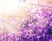 floral print nature photography flower print nursery botanical wall art photography decor fine art photography botanical lilac pink purple
