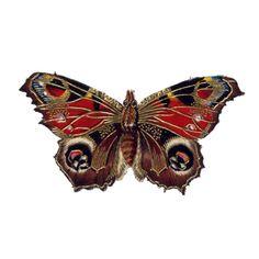 victorian scrap butterfly