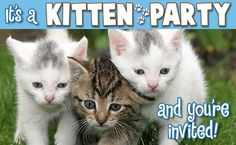 """Kitten Party"" Is The Movie Our World Needs Right Now"