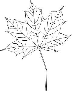 Liść klonu szablon Leaf Template, Templates, Leaves, Home Decor, Stencils, Decoration Home, Room Decor, Vorlage, Home Interior Design