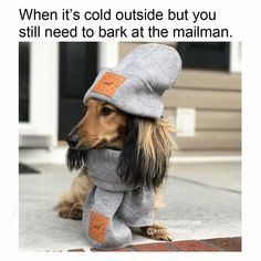When it's cold outside, but you still need to bark at the mailman.