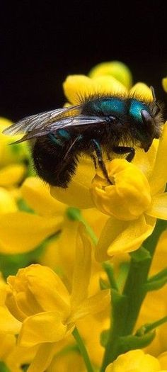 Orchard Mason Bees - they are gentle, easy to observe, good pollinators, and kept in small wooden dwellings.