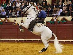 Pablo Hermoso de Mendoza Flamenco Dancers, Riding Lessons, White Horses, Pamplona, Mendoza, Extreme Sports, Horse Stuff, Dressage, Equestrian