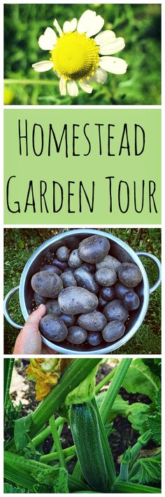 Take a tour of my backyard garden, plus 11 more awesome homestead gardens!