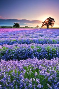 Beautiful Color Palette Of The French Country Side....Breathtaking