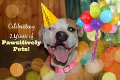 Celebrating 2 Years of Pawsitively Pets With a Blogiversary Giveaway! | Pawsitively Pets