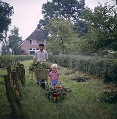 Wheelbarrow filled with garden disposal. The Netherlands, date unknown.