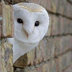 New white bird photography snowy owl ideas Owl Photos, Owl Pictures, Beautiful Owl, Animals Beautiful, Beautiful Creatures, Nocturne, Wild Animals Photography, Barred Owl, Bird Silhouette