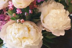Florissimo - Flowers for weddings and events in Shropshire. PEONY, APR-JUL. From Florissimo Flower Directory at https://uk.pinterest.com/ByFlorissimo/flower-directory/ | White, pink, red and coral