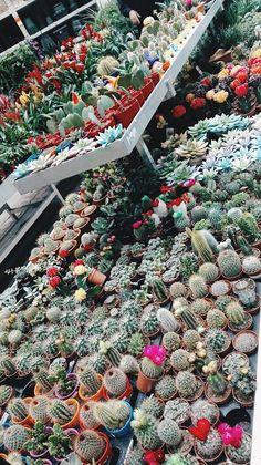 What a dream #Cacti #Cactus