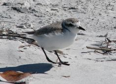 Blackbird And Co Treasure Island