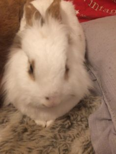Bunnies, Rabbit, Pets, Animals, Animals And Pets, Animales, Animaux, Rabbits, Rabbits