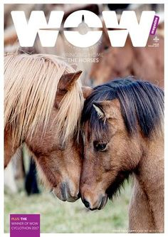 Meet the Icelandic horse and find out how you can be a part of a horse round-up in Iceland or stay at a horse farm instead of a hotel. Also: Amazing photos of Iceland, the winner of WOW Cyclothon 2017 and WOW destinations to put on your bucket-list. Low Cost Flights, Wow Air, Icelandic Horse, Life Guide, Travel Inspiration, Brand Inspiration, Travel Magazines, Horse Farms