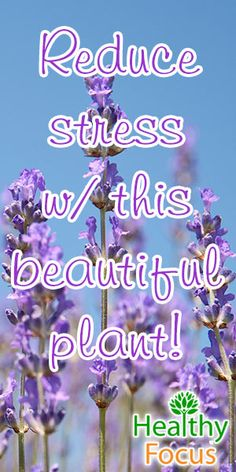 mig-reduce-stress-w-this-beautiful-plant