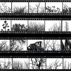 GA TEX 32X32 GEL FILM STRIPS | At Home