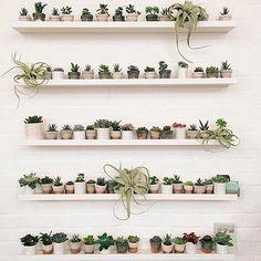 @kestrelshop Check out this DREAMY #plantshelfie - ah!  @geo_fleur If you don't follow them you should. #plants #succulents #pots #tillandsia #geofleur