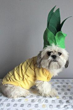 Insanely Cute Dog Halloween Costumes: DIY Pineapple Dog Costume | If you're looking for the best dog Halloween costumes, such as dog Halloween costumes DIY, DIY Halloween costumes for dogs, small dog Halloween costumes funny and more! So, if you're in the mood for some easy Halloween costumes for dogs funny, check out these cute Halloween costumes for dogs and funny dog costumes halloween! #doghalloweencostumes #halloweencostumesfordogs #halloweencostumes #dogs #dogcostumes #dogcostumeshalloween Cute Dog Halloween Costumes, Diy Dog Costumes, Halloween Cat, Costume Ideas, Halloween Inspo, Beagle, Diy Pet, Cat Dog, Girl And Dog