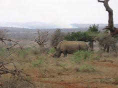 Hluhluwe–iMfolozi Park - Wikipedia, the free encyclopedia Kwazulu Natal, Elephant, Park, Free, Animals, Animais, Animales, Animaux, Elephants