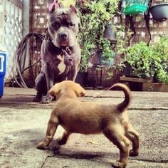 45 Dogs and Puppies Pictures