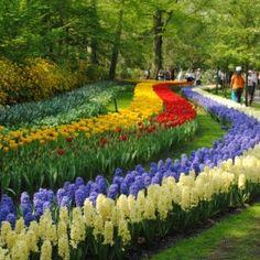 Holland Michigan Tulip Festival
