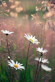 #beautifulflowersinvase
