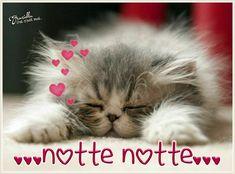 Buonanotte #buonanotte ♡ Graziella ~ Oui, c'est moi... Funny Night Quotes, Good Night Quotes, Cute Good Night, Good Night Sweet Dreams, Italian Memes, Good Night Blessings, Good Night Greetings, Beautiful Kittens, Grumpy Cat Humor