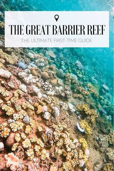 A Guide to the Great Barrier Reef: Is It Worth It? A Guide to the Great Barrier Reef: the best reefs to visit, where to go, what to do and is it worth the money? Perth, Brisbane, Melbourne, Tasmania Australia, Visit Australia, Australia Trip, Australia Honeymoon, Western Australia, Australia Holidays