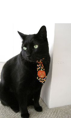 Halloween Cat Tie  I Want Candy by SnoopCattyCatt on Etsy, $12.00