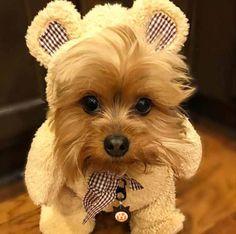 Cody também pode ser um urso super fofinho e meigo