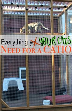 Have your cats been trying to escape to the great outdoors? Maybe it's time to build them an outdoor cat enclosure! Here's a list of everything you need for a catio! #LitterOdorRevelution {ad}