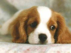 ღ Respeite e Proteja os Animais ღ: *Os animais também têm depressão*
