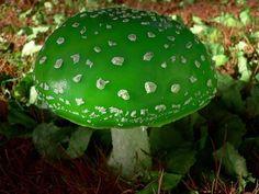 Amanita viridis (rare mushroom) - Steve Reekie @ flickr  google.com