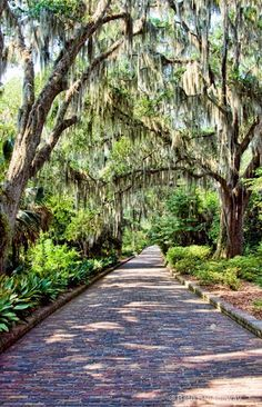 Amazing Snaps: MaClay Gardens Park, Tallahassee, FL ... good idea to have paths that accommodate a small garden tractor or cart