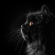 Os 10 mandamentos do gato - Por Lily Farias =^.^=