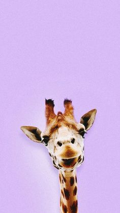 giraffe, wallpaper, and animal by Møni | We Heart It
